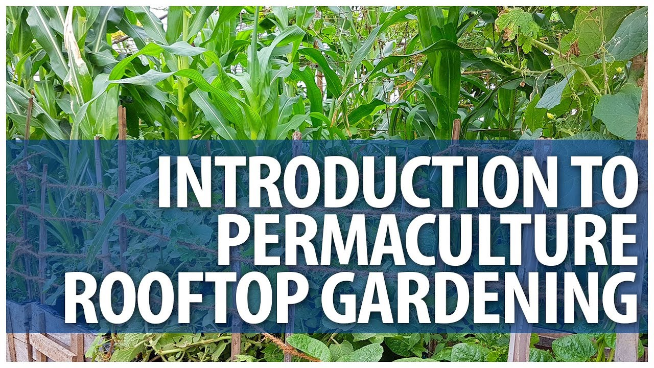 Introduction To Permaculture Rooftop Gardening Classes   FULL Day Sessions