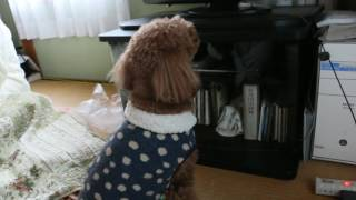テレビを見ながら画面に向かって文句言ってます(笑)