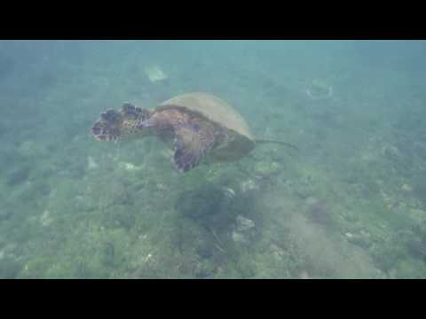 Under the Sea- Galapagos Adventures