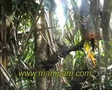 Lizard steals food from dead elephant