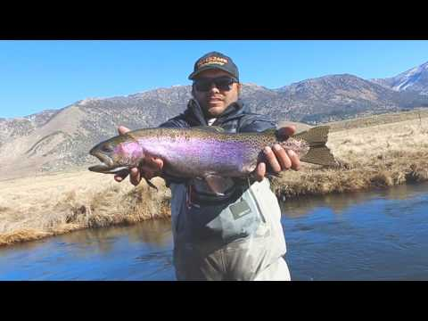 Eastern Salvation | Owens River Fly Fishing