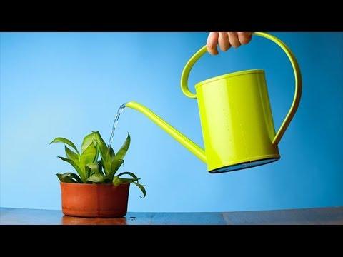 Полив комнатных растений! Как правильно поливать цветы!