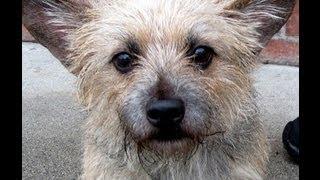 Adopt Toto! Cagefree K9 Camp Rescue