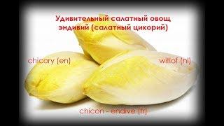 Удивительный салатный овощ-эндивий (салатный цикорий)/часть 1