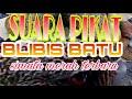 Suara Pikat Blibis Batu Terbaru Simata Merah  Mp3 - Mp4 Download