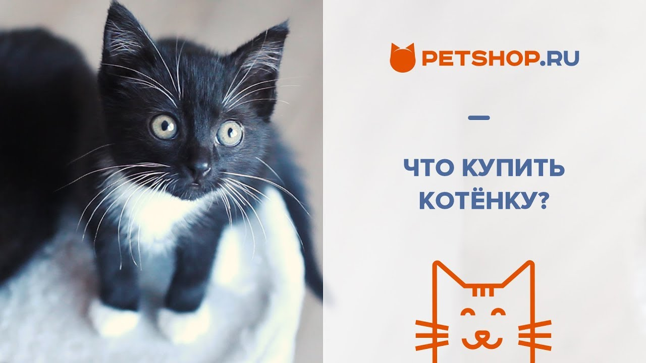 Котята мейн-кун окрас черный мраморный - YouTube