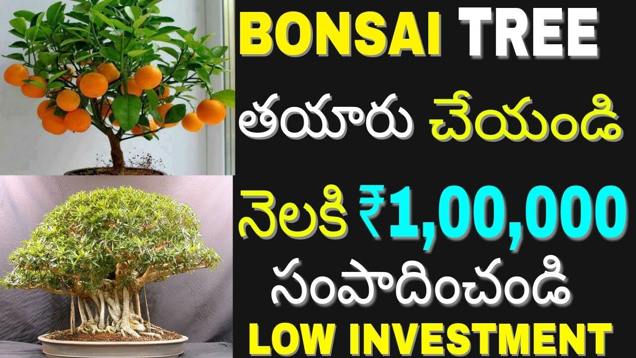 New Low Investment High Profit Bonsai Tree Business idea 2018 | Earn Money  at Home | in telugu
