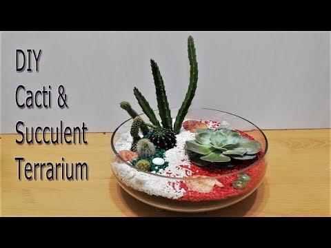Comment Creer Un Terrarium Youtube
