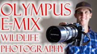 Olympus E-M1X Wildlife photography. Micro 4/3rds better than full frame CANON!?