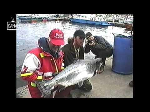 Salmon 50 Pound Fighting Hard Lax 24