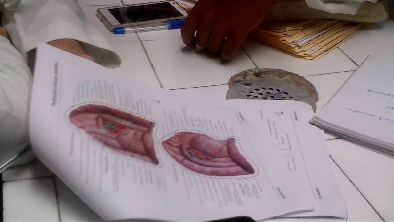Repaso De Anatomia 2 De Torax Dr Fernando Castillo Completo - YouTube