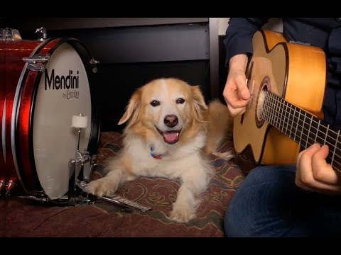 Logan & Lewis - Dog Plays Drums to AC/DC