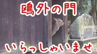 この門は森鴎外が奈良滞在の際の宿舎の門だそうです。 門からちょこんと...