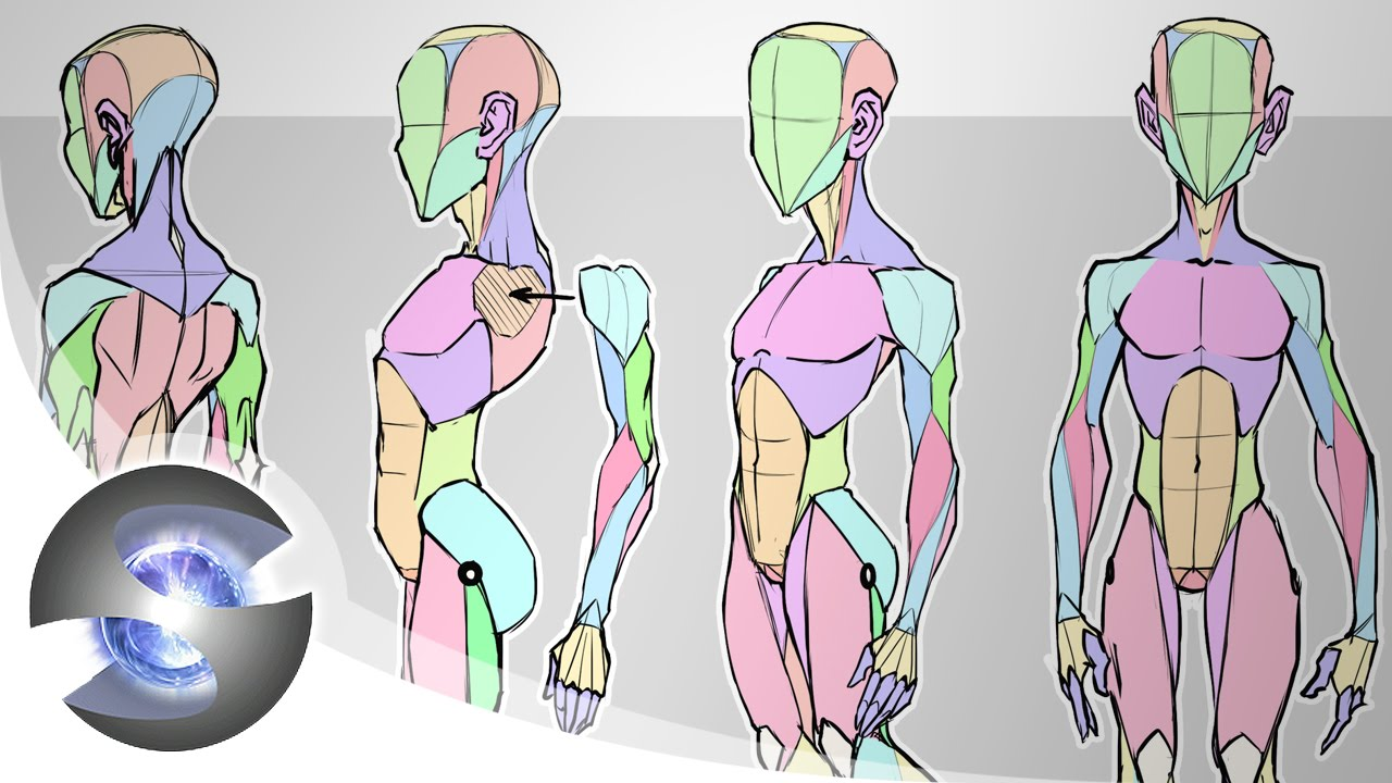 Sycra\'s Simplified Anatomy Model - YouTube