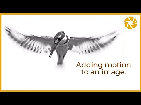 Bird Photography Tips And Tricks - SLOW SHUTTER SPEEDS For Blurred Effect On The Wings,