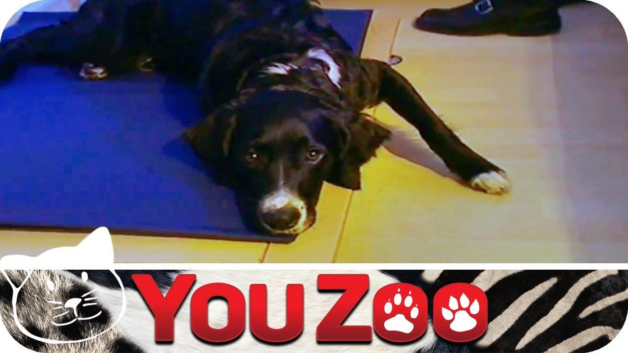 How To: Hundebett I Hundebett Tutorial I Bett für Hund - YouTube