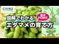 カインズ野菜図鑑 エダマメの育て方 の動画、YouTube動画。