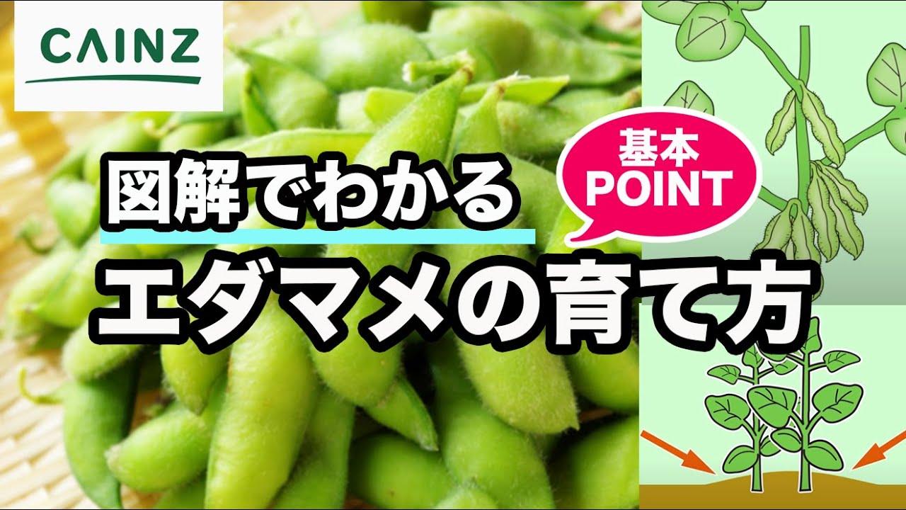 育て 方 枝豆
