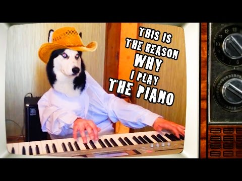 CATS & DOGS PLAYING PIANO COMPILATION - FUNNY!