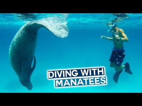 Volunteering with Manatees in the Caribbean | Belize Travel Vlog
