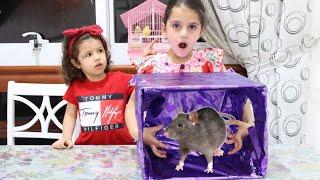 تحدي ماذا يوجد في الصندوق