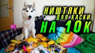 Вкусняшки для собаки хаски на 10000 рублей