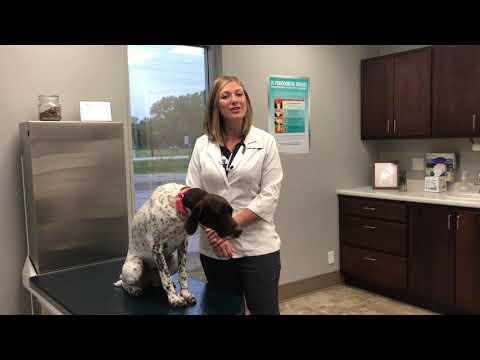 Member Spotlight: Atlantic Animal Health Clinic