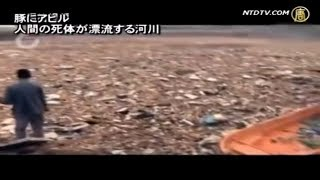 豚にアヒル 人間の死体が漂流する河川 thumbnail