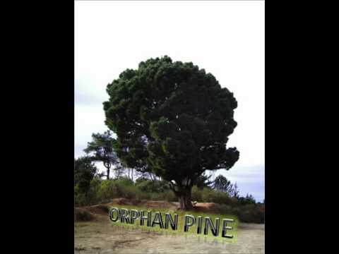 Orphan Pine - Madness Control