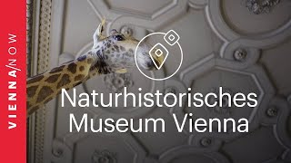 Naturhistorisches Museum Vienna - VIENNA/NOW Sights
