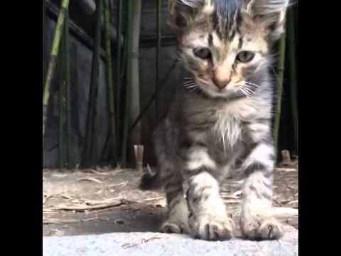 Who made this 😂😂 #ShmoneyDance #cat #dance #bobbyshmurda