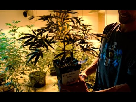 Cannabist Show: He sells organic marijuana; He makes stylish stash kits