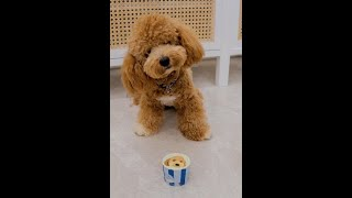 Petissier.sg Pupcakes for Poodles !