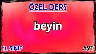 4) İnsanda Sinir Sistemi - Beyin - Özel Ders (11. Sınıf)