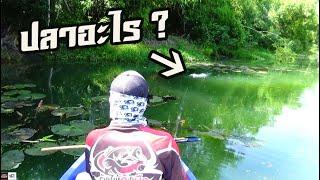 กัดแบบนี้ รู้เลยปลาอะไร ?