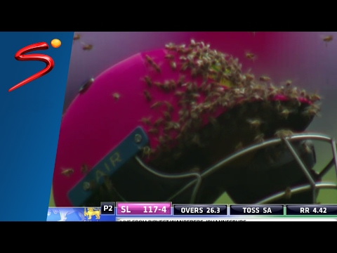 Bees swarm cricket match (full) - South Africa vs Sri Lanka