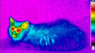 Thermal Imaging Infrared photography PEOPLE