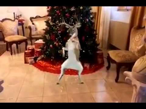 Renne che ballano la canzone di Natale