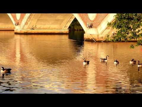 Charles River / Cambridge Massachusetts HD