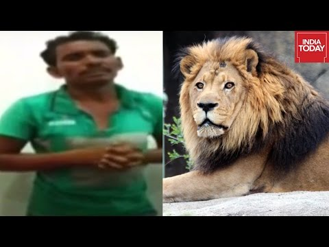 Man Jumps Into Lion Enclosure At Nehru Zoo Caught On Camera