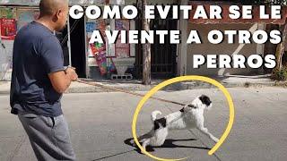 Mi PERRO ladra a personas y perros en la CALLE, como EVITARLO.