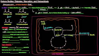 Ketone Bodies (Part 4 of 4) - Diabetes, Starvation, and Ketoacidosis