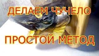видео Чучела рыбы | Блог карполова
