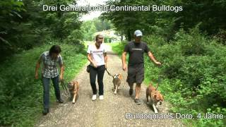 Continental Bulldog - A History Of Big Hearts