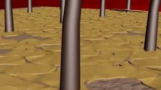 видео Обзор шампуней от перхоти