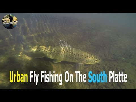 BEYOND THE FLY  - Urban Fly Fishing On The South Platte | Ep. 8
