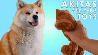 AKITA INU  Do Japanese Akitas Like To Play With Toys? | Yuki And His Favorite Toys | 秋田犬