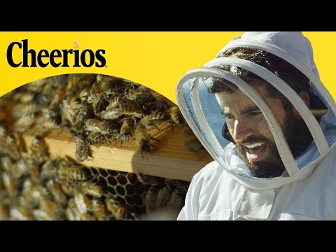 People Harvest Honey For The First Time // Presented By BuzzFeed & Cheerios
