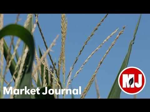 Market Journal - August 5, 2016 (full episode)