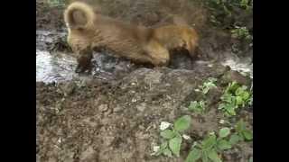 Собака- в грязи купака!